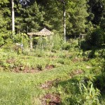 The rising backyard food forest