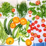 harvest often with permaculture