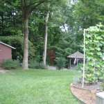 backyard before permaculture