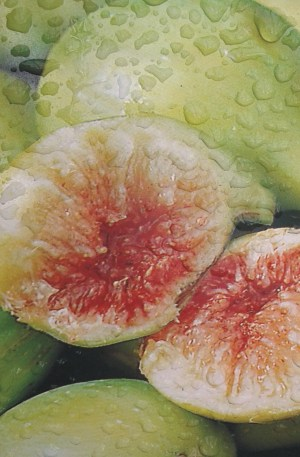 higuera blanca frutal