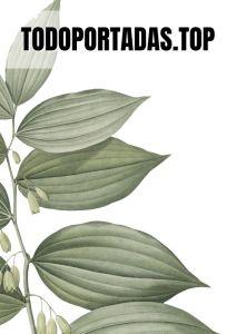 Portada aesthetic hojas verdes para Word