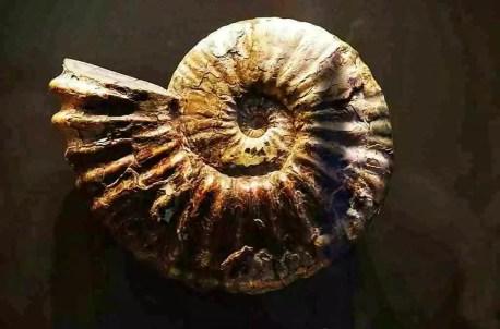 Ammonites encontrado en las inmediaciones de las Cuevas de Zaén, donde antiguamente descansaban las aguas del mar de Tetis.