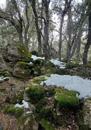 Carrascal de Bagil en invierno en las cercanías de la cueva de la Iglesia