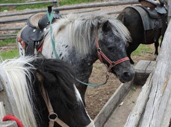 curar herida en caballo equino
