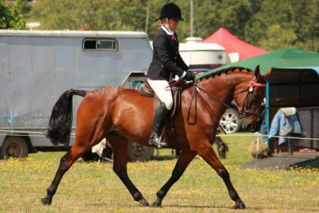 standardbred caballo de australia