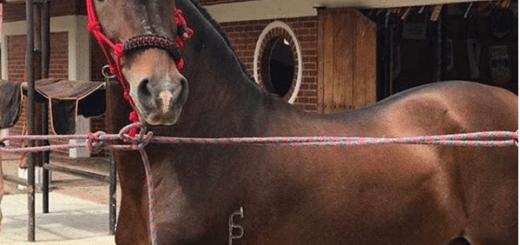 imagen foto de un caballo