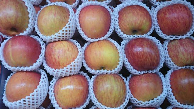 ringo fruta japonesa