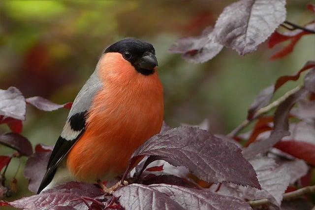 Aves Domesticas Cuidados, tipos curiosidades