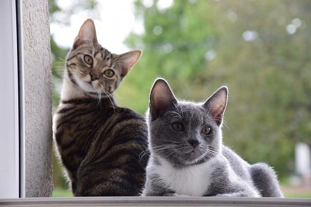 Comportamiento de un gato esterilizado