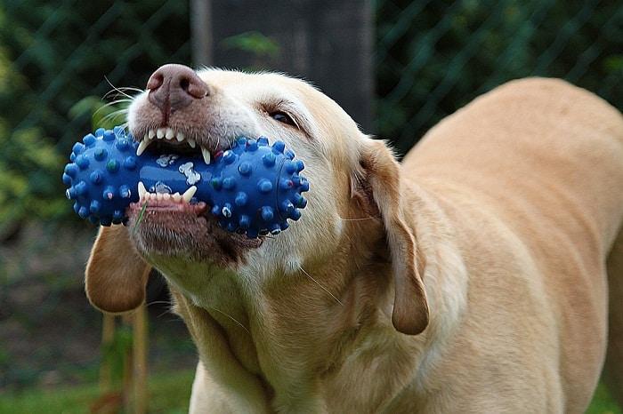 ¿Cómo limpiar los dientes de mi perro?