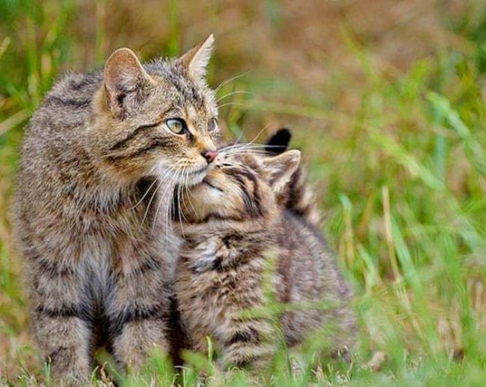 beso gato