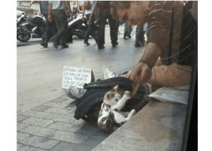 Jesús el hombre que prefiere dormir en las calles antes que abandonar a su gatita.