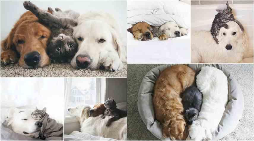 2 gatos y un perros