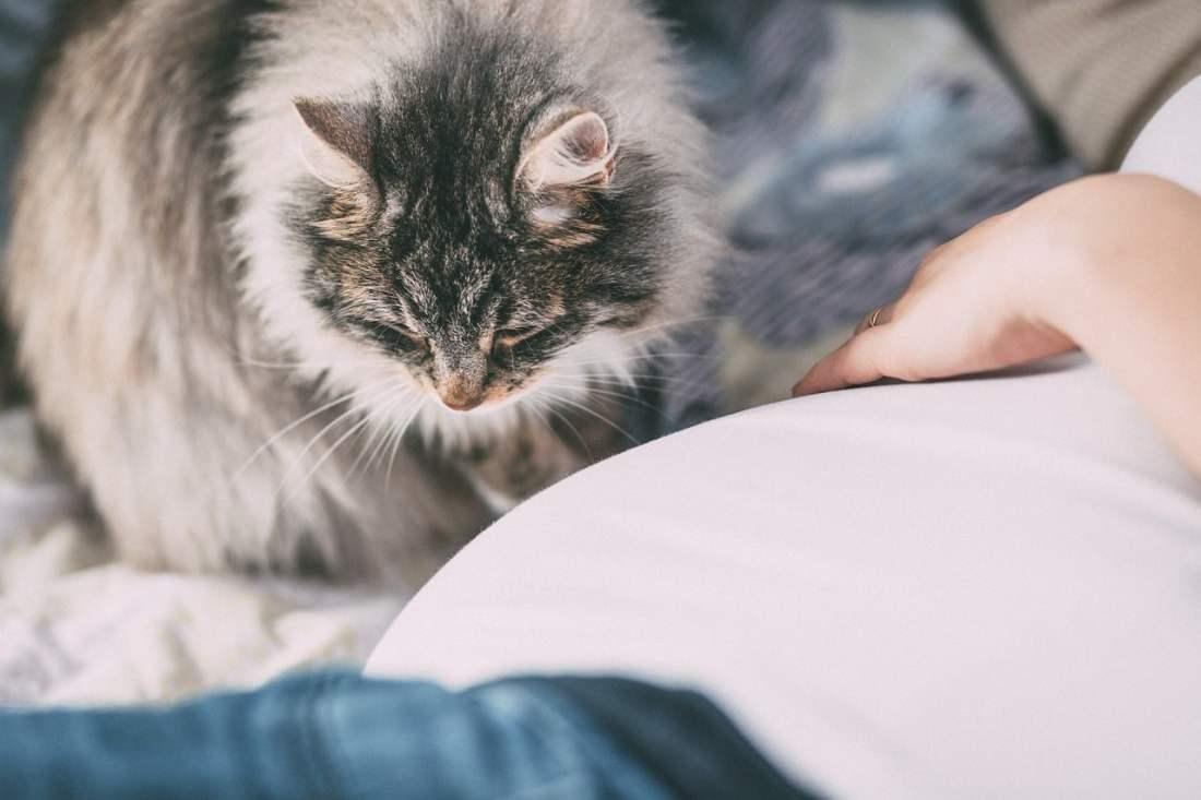 Por qué mi gato duerme en mi cabeza
