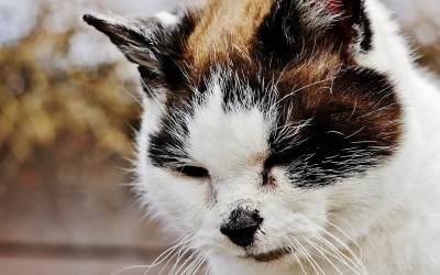 Por qué mi gato tiene diarrea y vomito