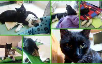 Él gato enfermero que cuida de otros animales en un centro veterinario