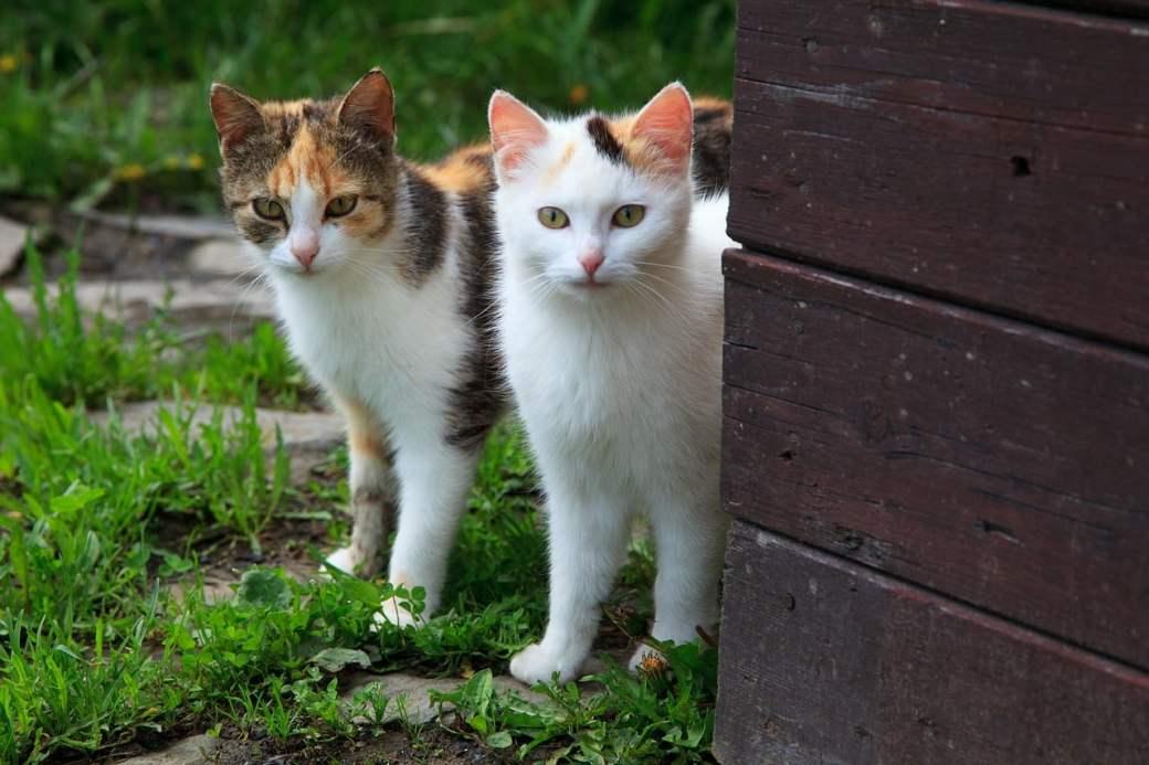 Cómo saber si un gato es macho o hembra