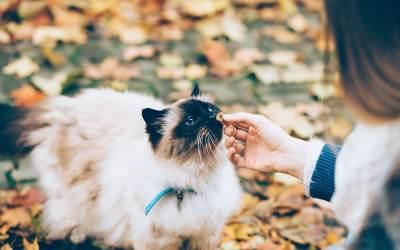 Cómo saber si mi gato me quiere