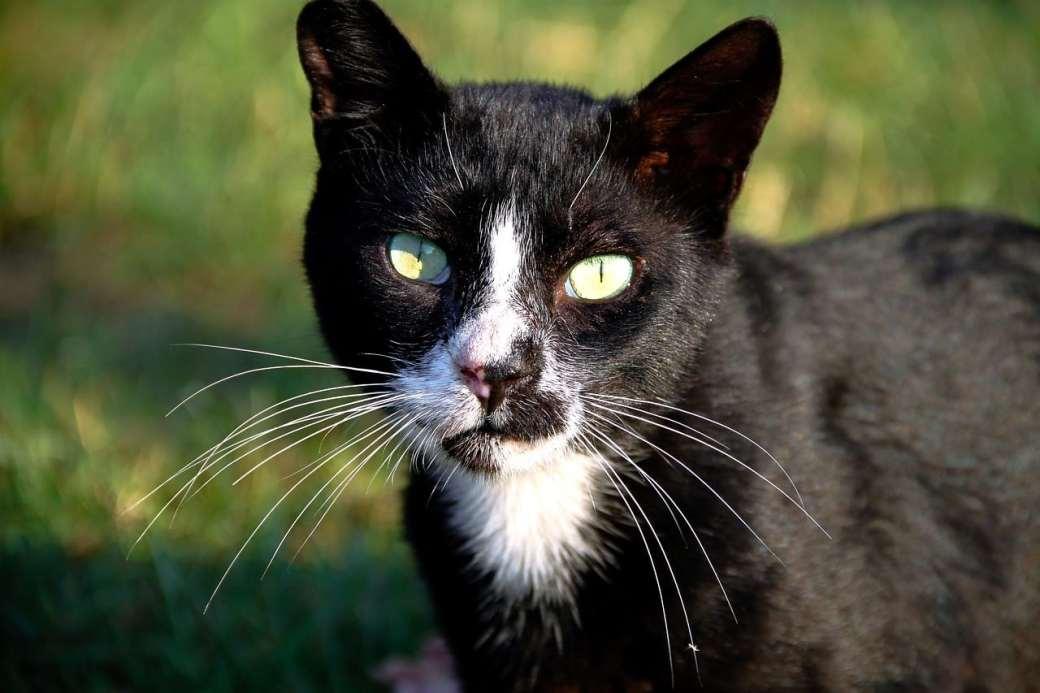 Por qué los gatos le temen a los pepinos
