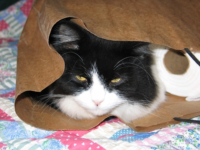 El veterinario explica los remedios caseros para el estreñimiento del gato