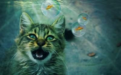 Por qué los gatos le temen al agua