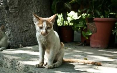 Cuánto vive un gato sin comer
