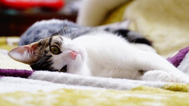 Problemas de salud de los gatos