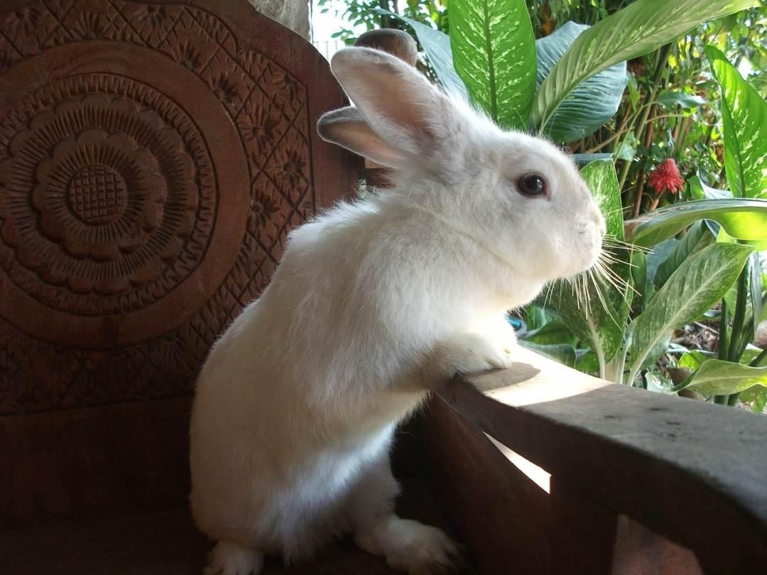 ▷ Nombres para conejos | Mas de 100 nombres ORIGINALES! 🐰