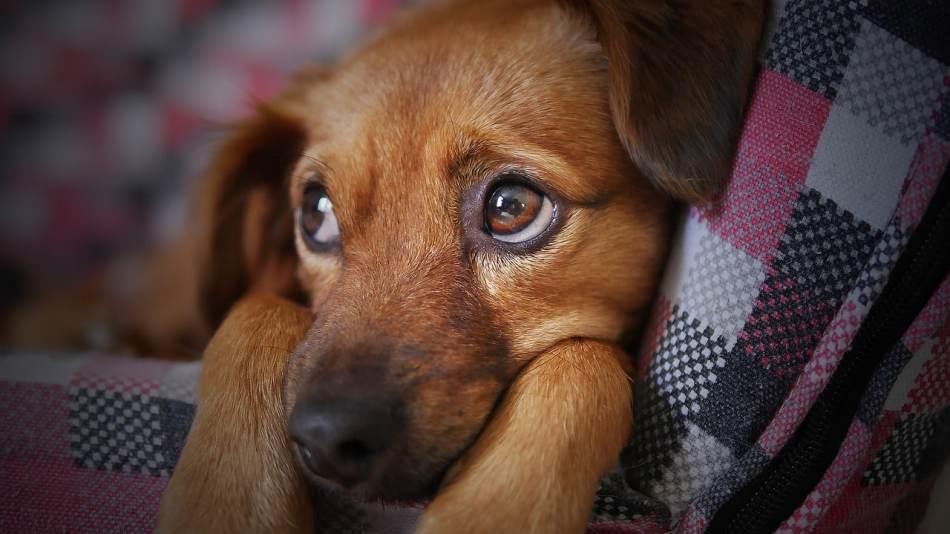 Calmar a un perro con miedo