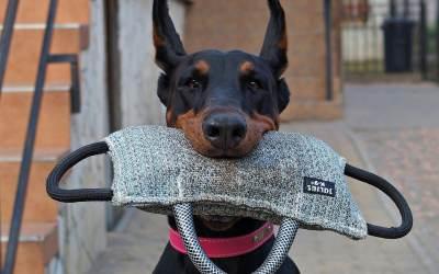 Como piensan los perros