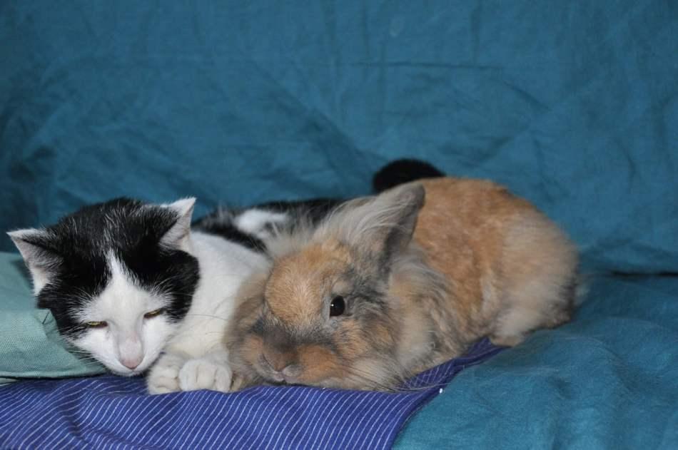 Conejos y gatos
