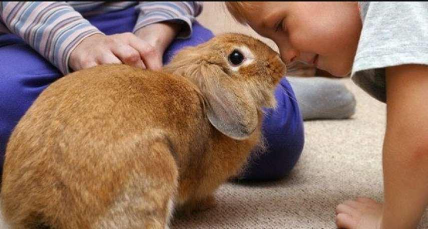 Los conejos huelen mal