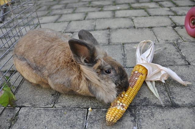los conejos pueden comer cacahuates