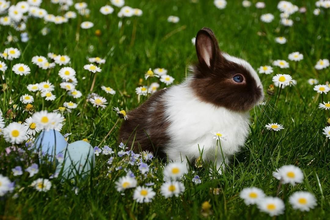 mi conejo tiene diarrea