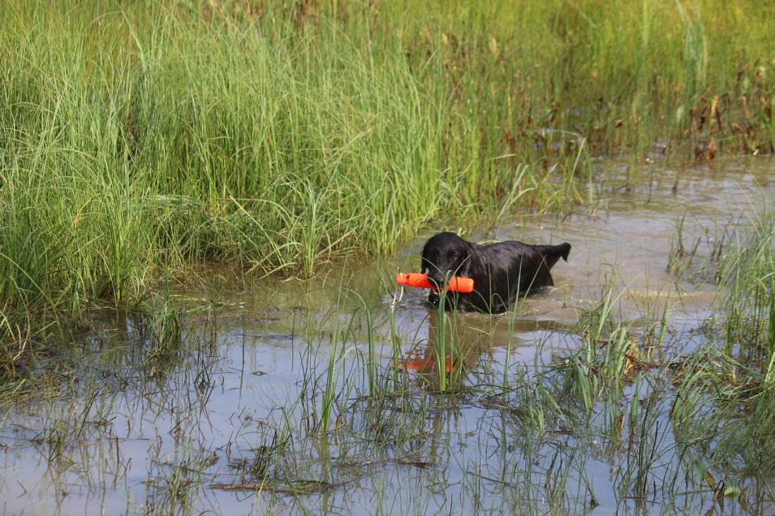 perros de agua