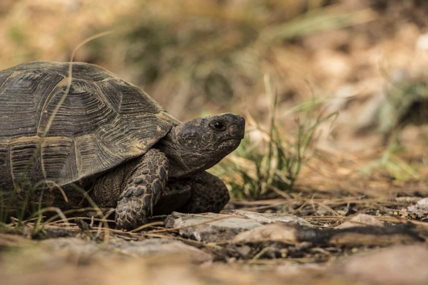 Por qué las tortugas son lentas