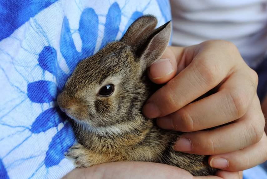 a los conejos les gusta que los acaricien