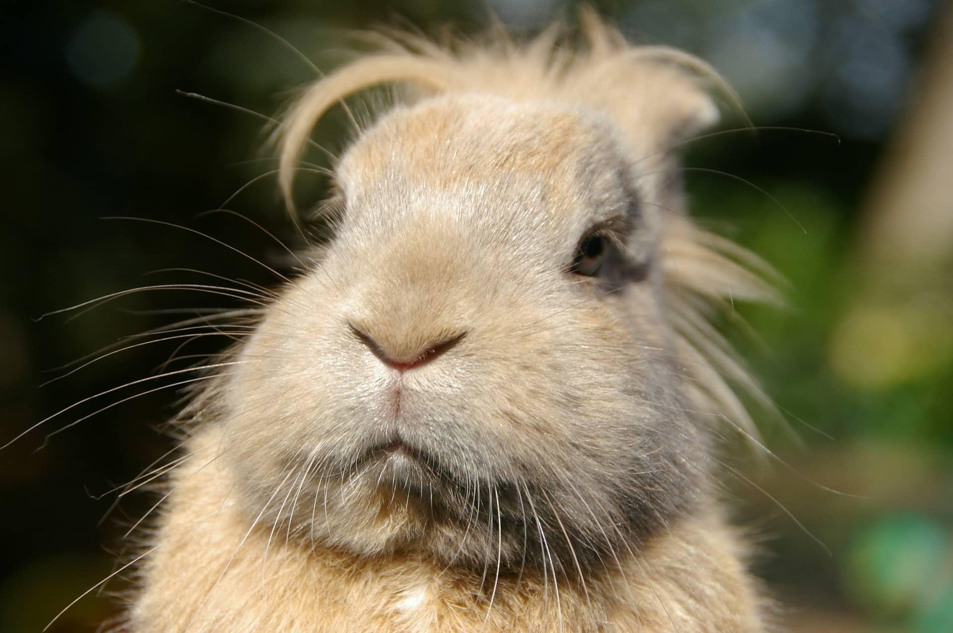 mi conejo no come heno
