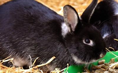 mi conejo no come
