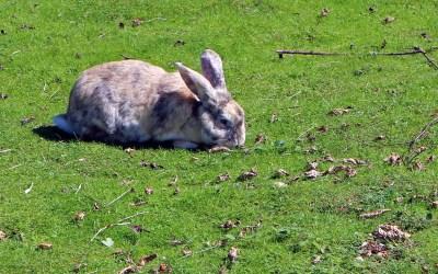 mi conejo puede comer pasto