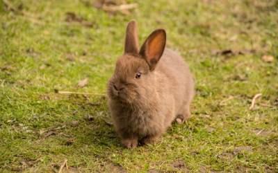 por qué los conejos pierden pelo