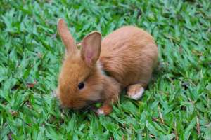 que come un conejo bebe