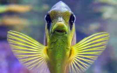 cómo respiran los peces bajo el agua