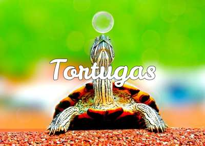 Todo sobre tortugas