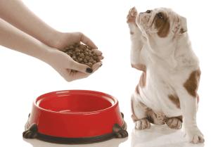Cómo saber el momento para cambiar la dieta de un perro cachorro a la de un adulto