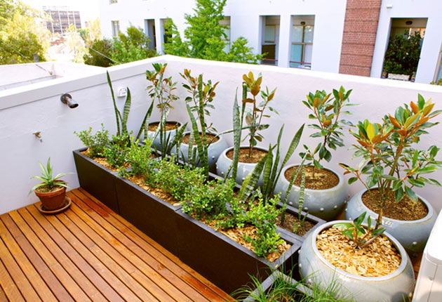 Los cultivos más eficientes para una huerta urbana
