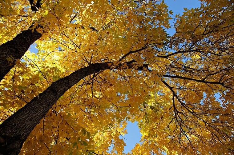 recognize deciduous trees - recognize satanic attacks