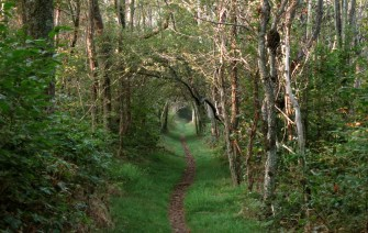appalachian-trail-labyrinth-unspooled