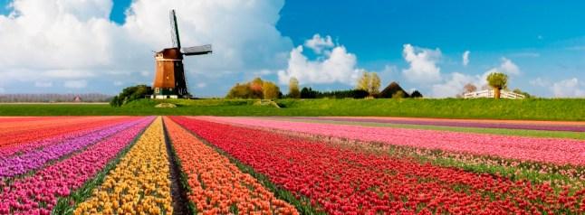Tulpen-molen