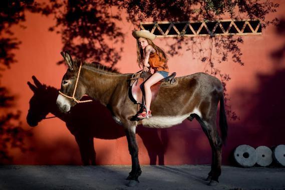 Barn- donkey fun